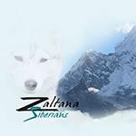 Zaltana Siberians