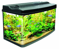 Fish & Aquatic Pets